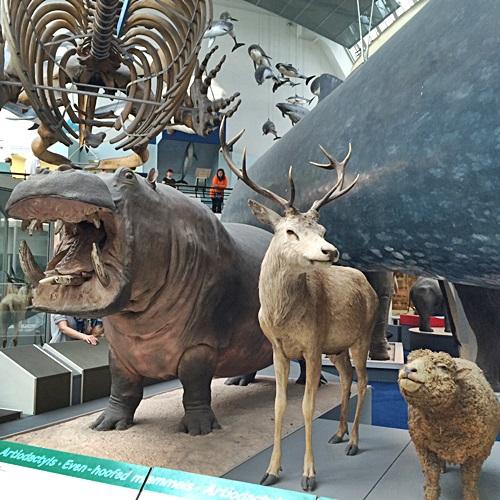 museu7